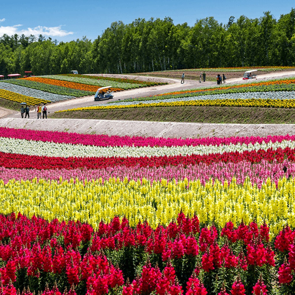 Top 25 Things To Do In Hokkaido