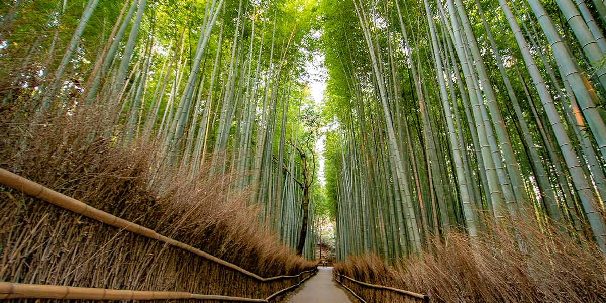 Top 25 Things to do in Kyoto: Arashiyama Bamboo Grove