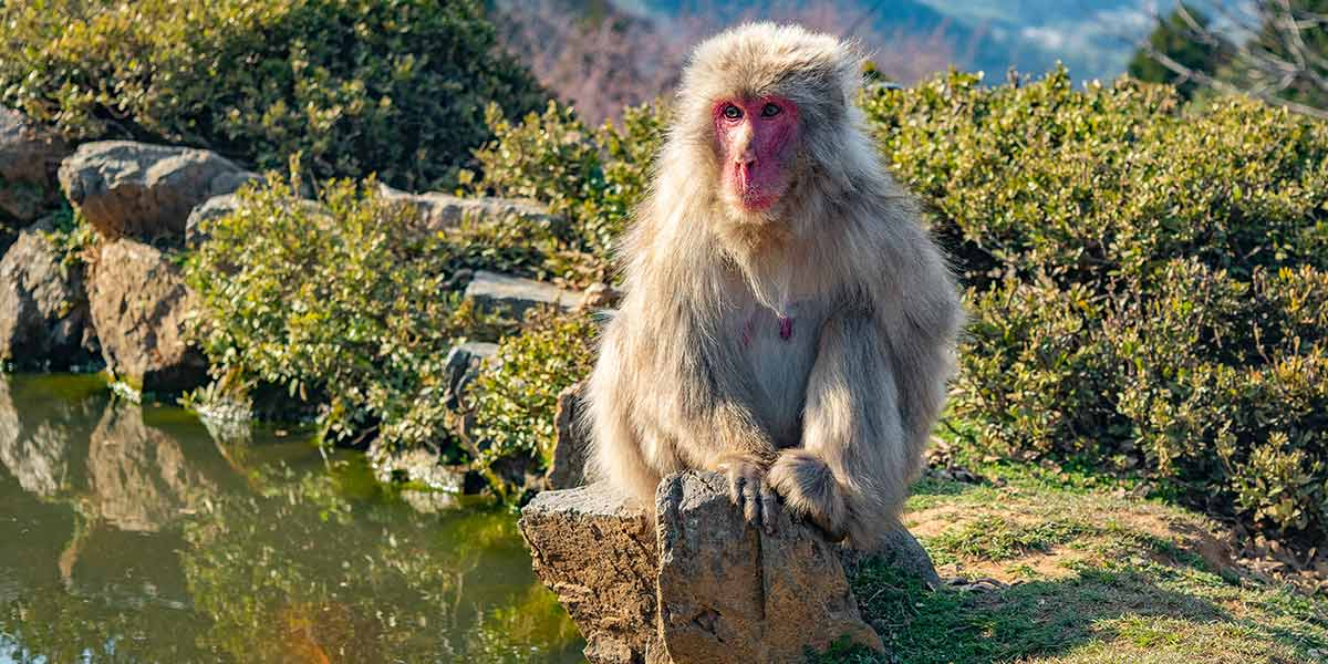 Top 25 Things to do in Kyoto: Arashiyama Monkey Park