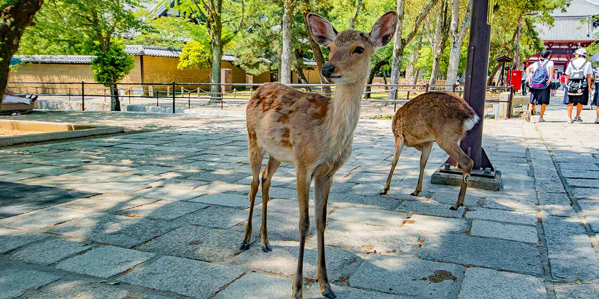 Best Places to Visit in Japan: Nara